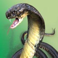 Змеиный яд или инъекции красоты